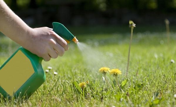 se débarrasser des mauvaises herbes en utilisant du coca-cola