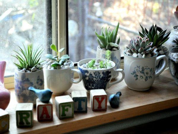 succulente dans tasse à thé vaisselle ancienne idée