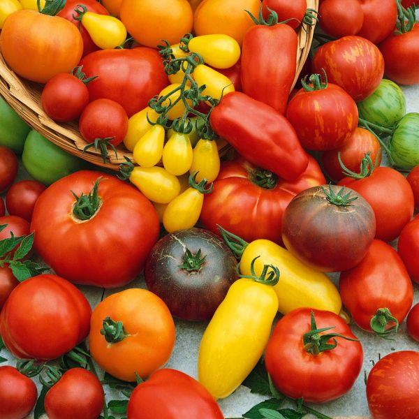 variétés des tomates conseils contre le mildiou