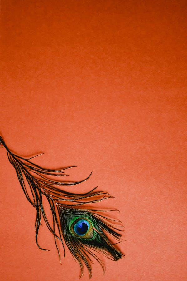 comment adopter la couleur de peinture terracotta en déco intérieur